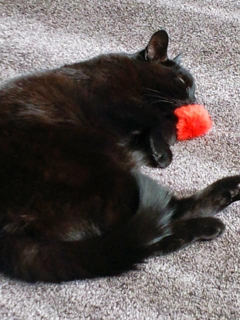 Spike was zo moe van het spelen met pluis.....dat ie er maar bij in slaap viel.