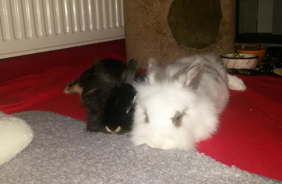 Punky en Teddy samen, die zijn altijd heerlijk aan het relaxen samen.