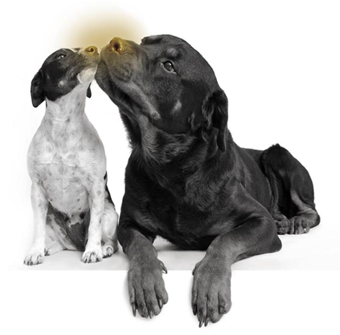 honden-vriendjes