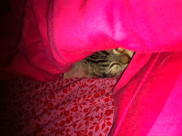 Heidi op haar favoriete slaapplaats.  Vooral in de koudere maanden.