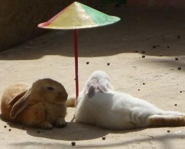 konijnen_in_de_zon