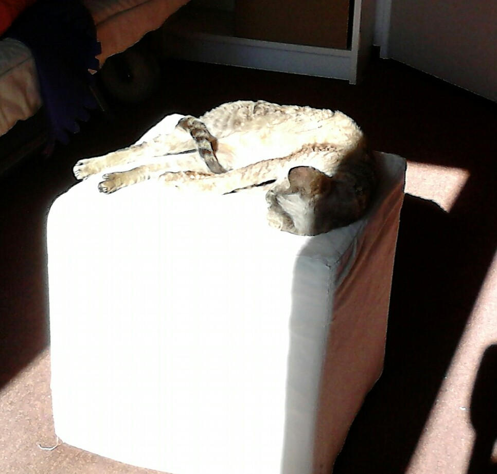 Ripley in de zon