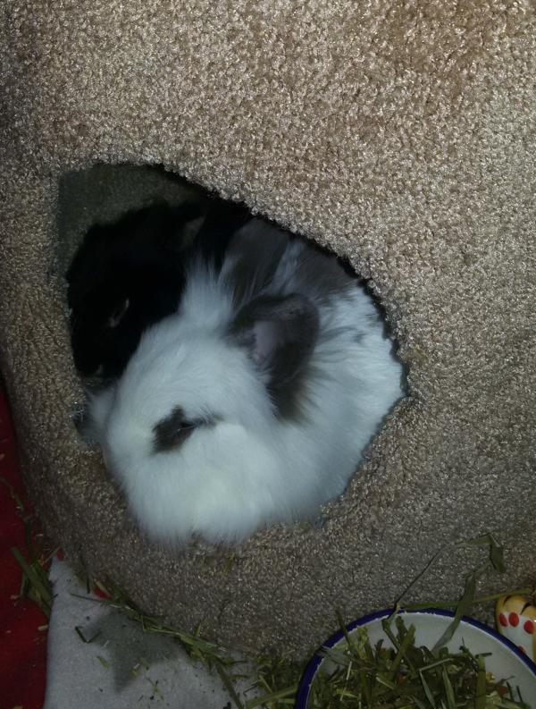 Punky en Teddy slapen samen in de toren.
