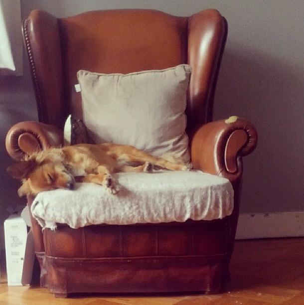 Lieve Mimi altijd maar chillen op die stoel, totaal voor pampus liggen.