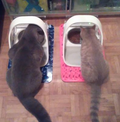 voerbakken_katten
