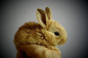 rabbitbaby